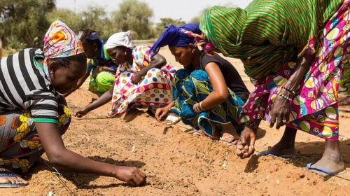 Afdb Pledges 6 5bn To Help Sahel Countries Fight Desertification 1 500x280