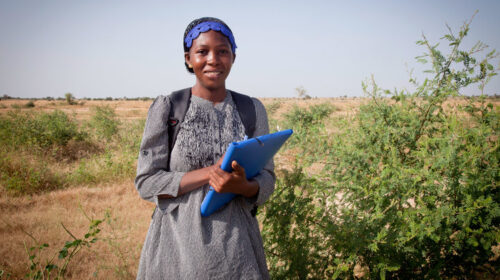 From The Field The Microscopic Creatures Helping Build Africas Great Green Wall 500x280