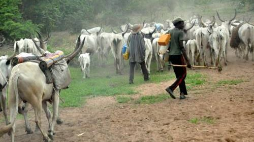Nigerian Presidencys Subtle Defence Of Herders Crimes By Oluyemi Fasipe 500x280